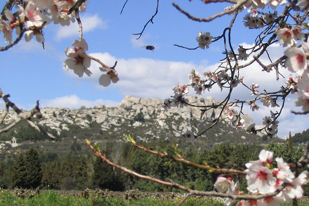 Gites & chambres d'hotes Mas de la chouette Saint rémy de Provence