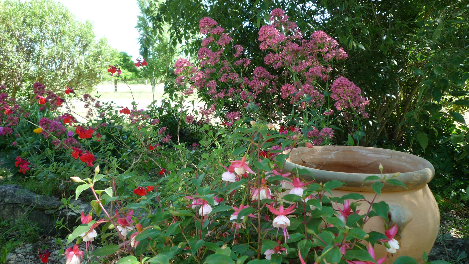 Awesome fleurs de jardin en mai contemporary design for Jardin octobre