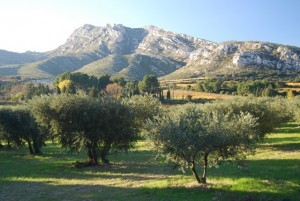The massif of the Alpilles facing le mas de la chouette