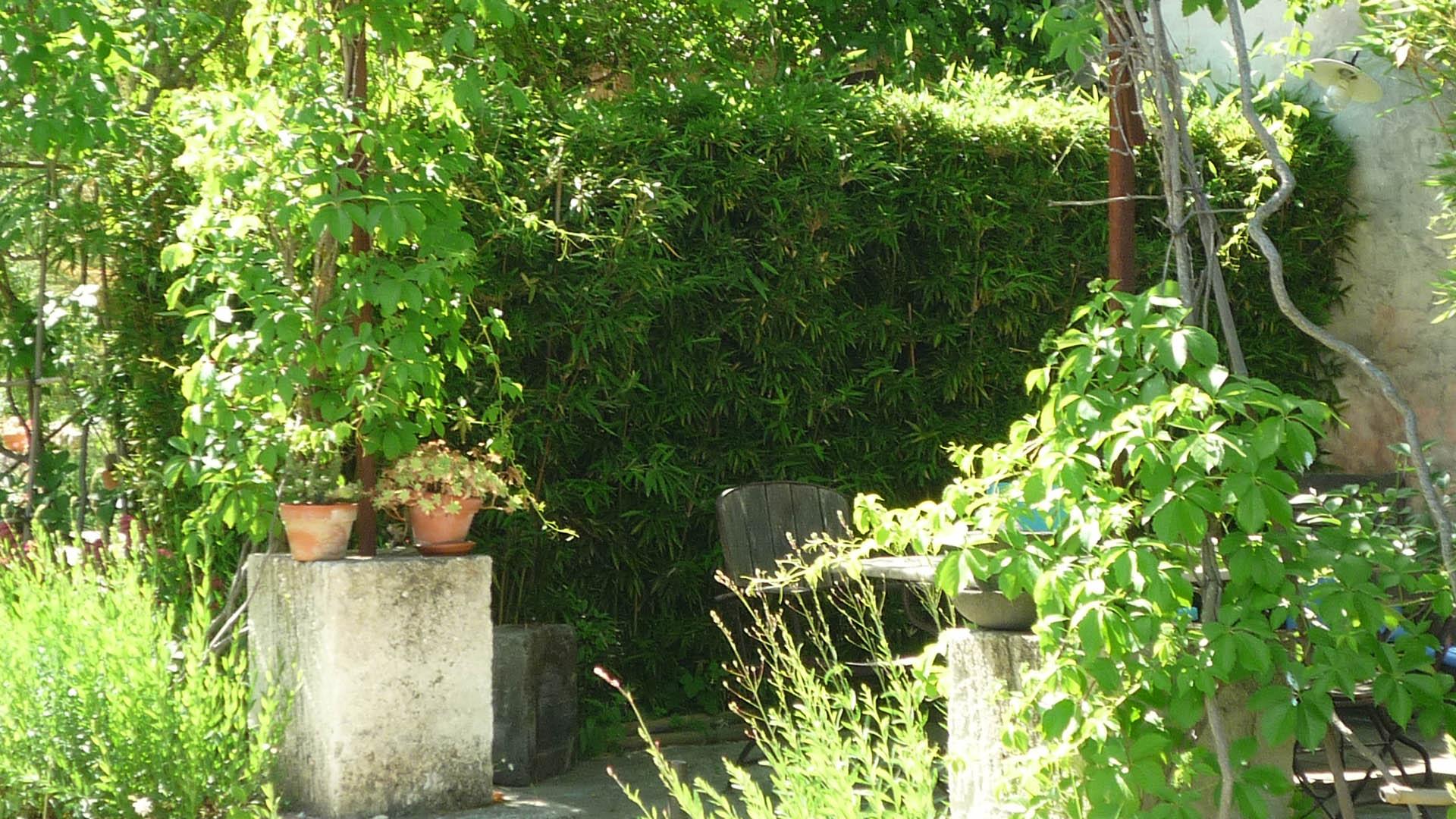 (English) Une partie de la treille du gîte du Mas de la Chouetteune-partie-de-la-treille-gite-mas-de-la-chouette