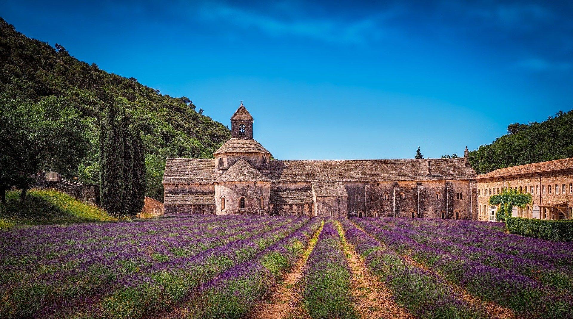 Abbaye de Senanque Lavande